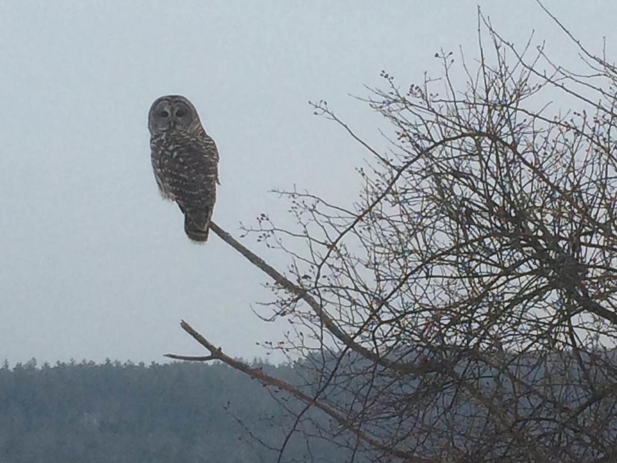 20210209-MAG-kerensa bartlett owl