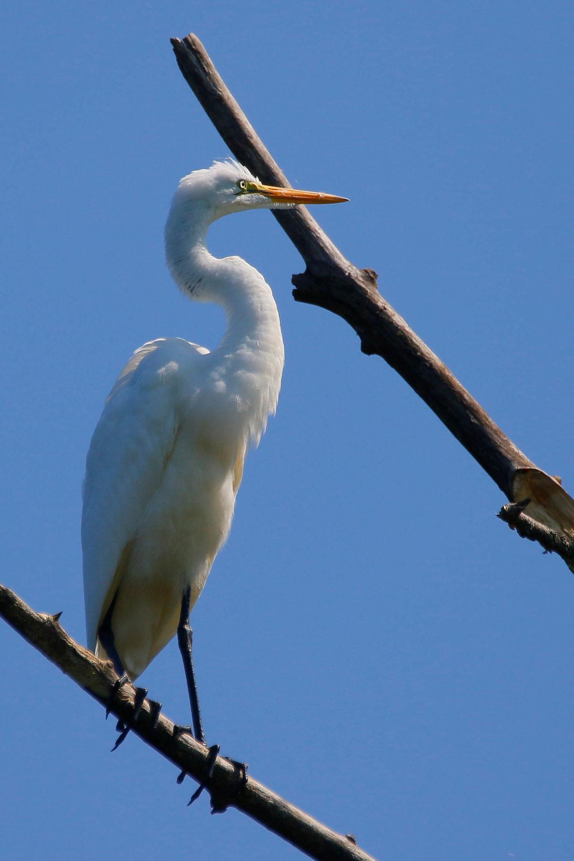 20210910-MAG-schmidt egret