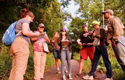 Volunteers seek survivors of devastating bat disease
