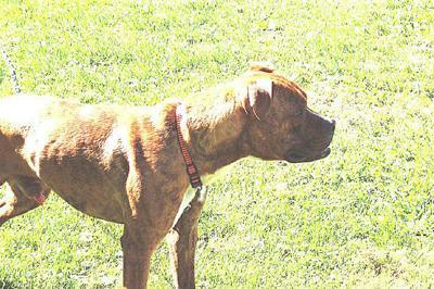 Dog owner sought