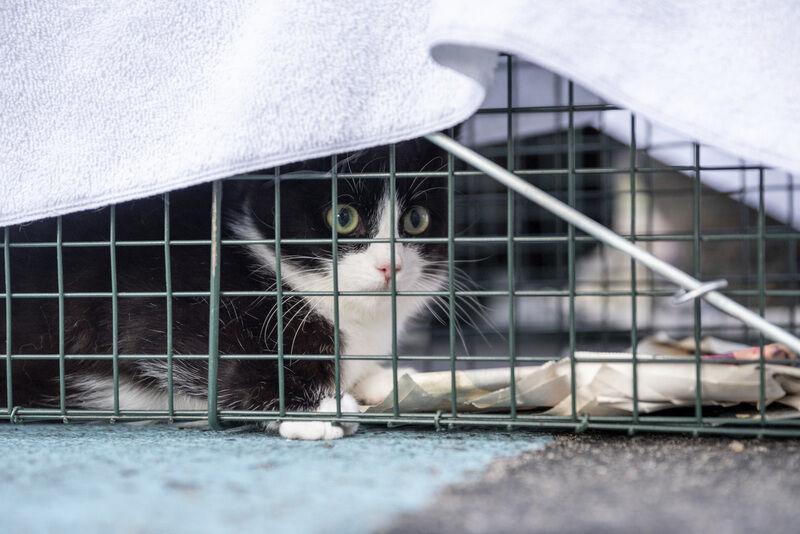 Cat wranglin' for population control