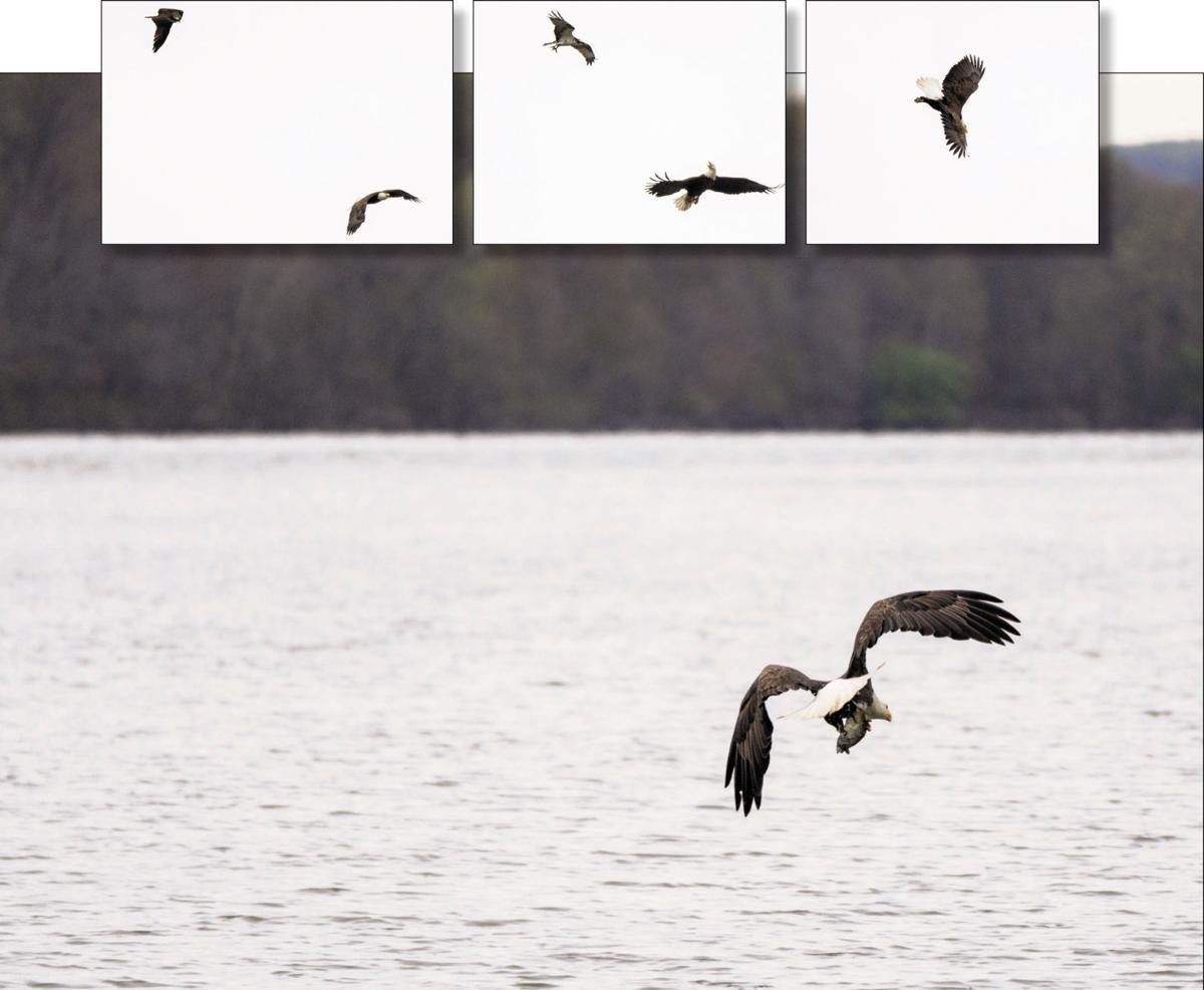 bird fight sequence.jpg