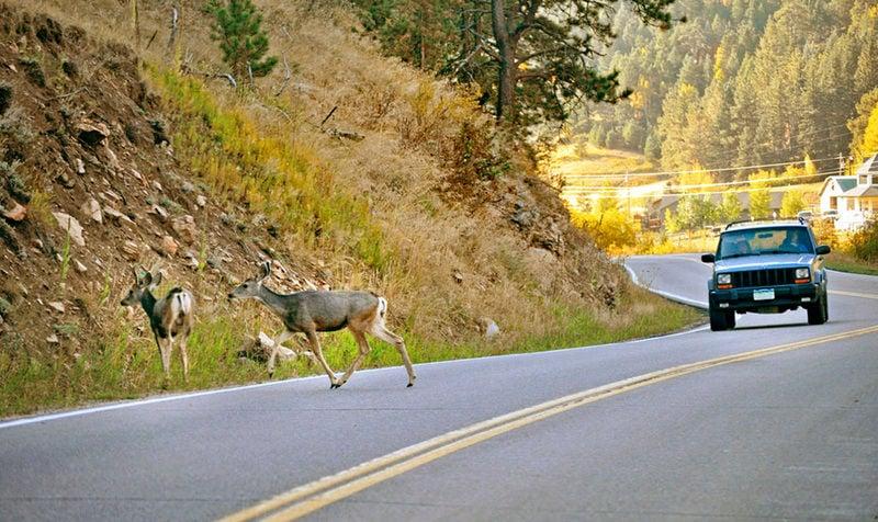Oh, deer! Collision season is here | Local News ...