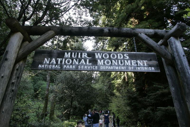 Massive redwood tree falls, kills hiker in California park