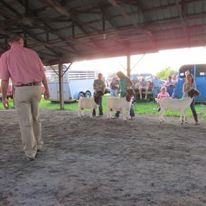 area youth show goat skills at ag expo - the shippensburg news