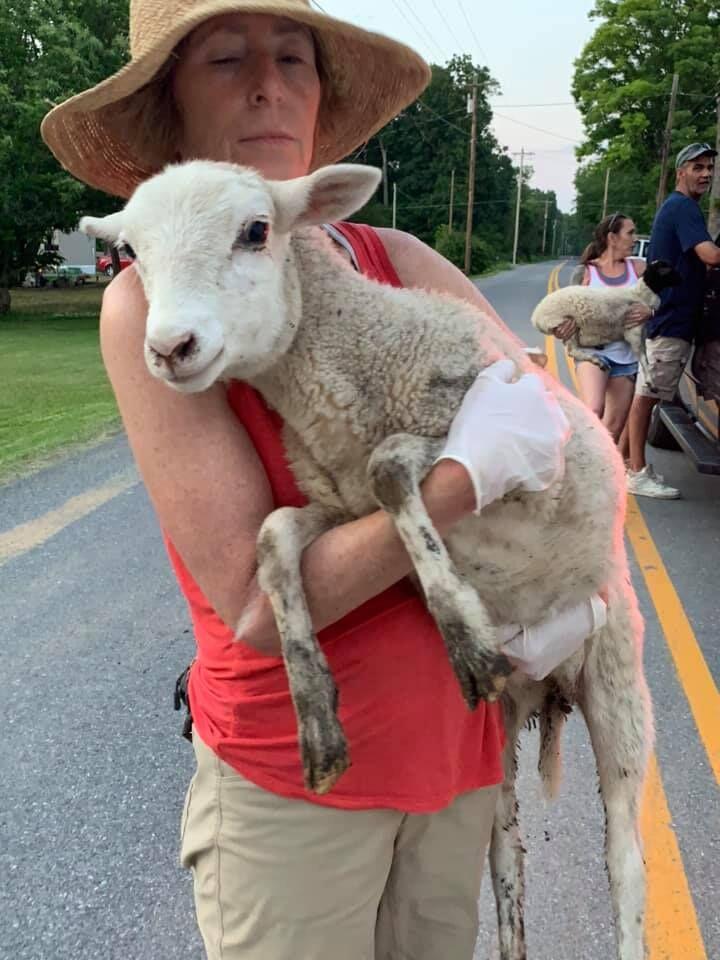 Animal Cruelty Bust
