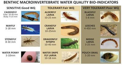 Macroinvertebrates