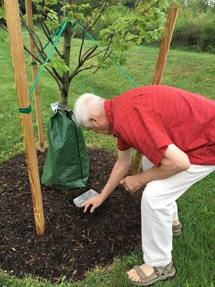 Shippensburg Shade Tree Commission