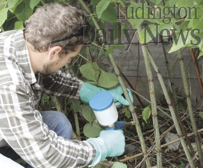Treating invasive plants