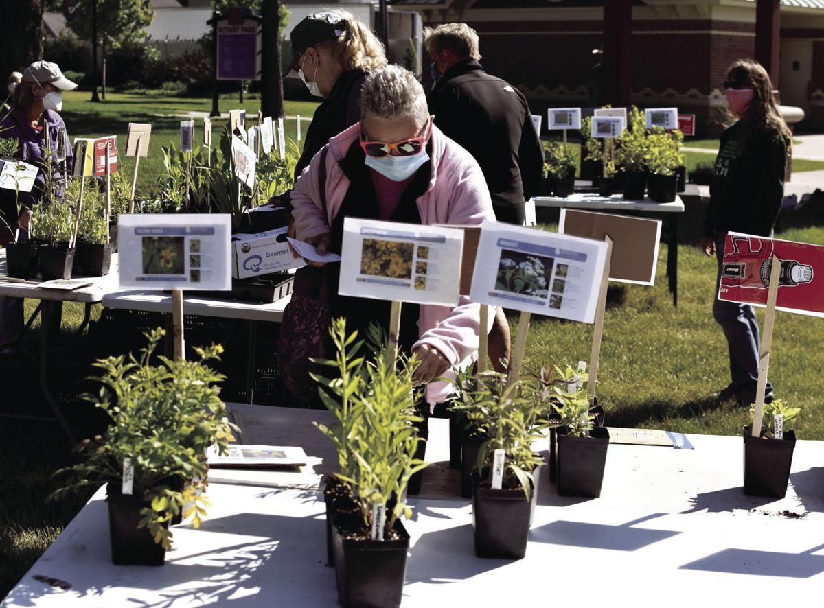 AFFEW native plant sale