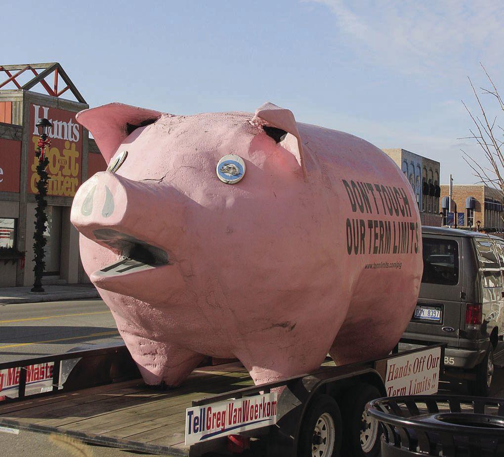 A not so little piggy
