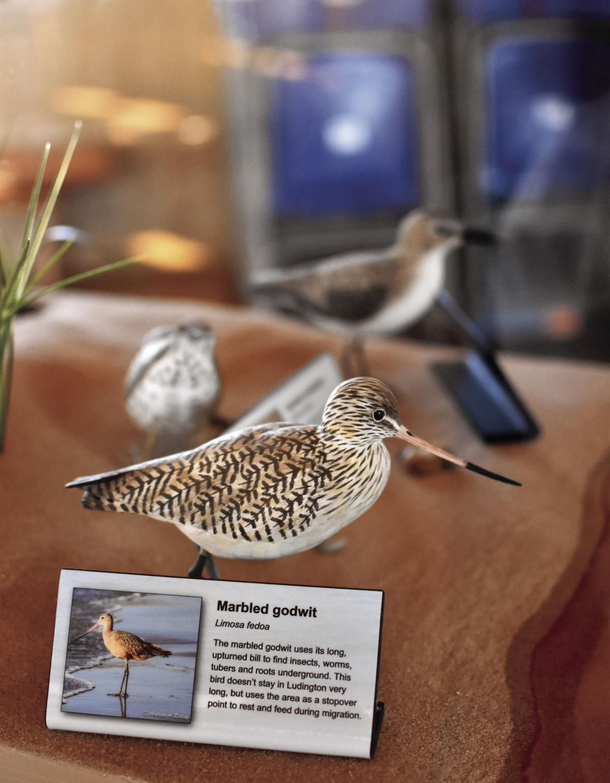 HH LSP Shoreline birds exhibit