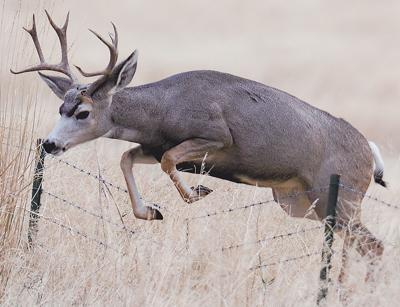 DNR releases 2017 Michigan Deer Hunting Forecast   Oceana's