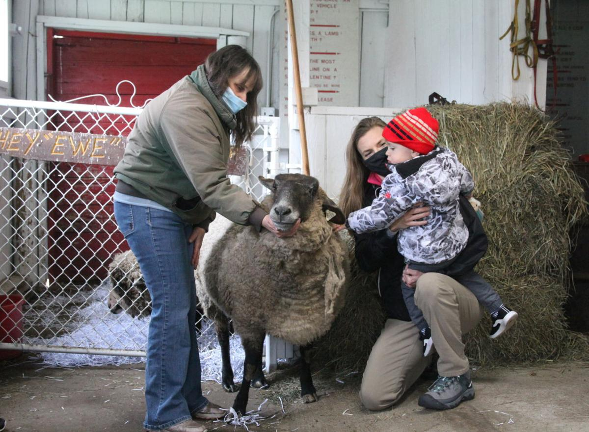 Circle Rocking S Children's Farm sheep-shearing