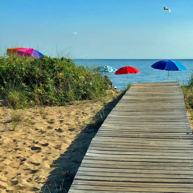 Fall and Chinese Medicine: How to let go of summer