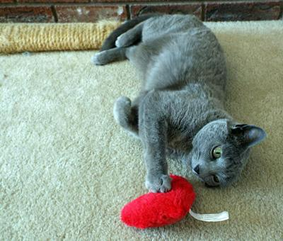 Feline fitness (yes!) — keep Tabby trim and healthy