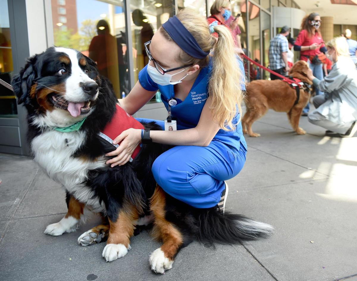 Photos: Yale New Haven Hospital holds its first-ever pet therapy dog parade