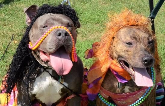Pooches on parade during Woofwalk at music fest Aug. 10 in Branford