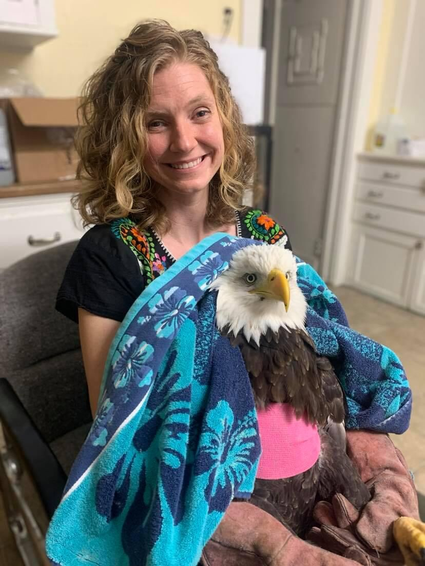 Will the injured bald eagle rescued in CT fly again?