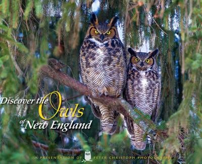 Discover owls of New England with bird photographer