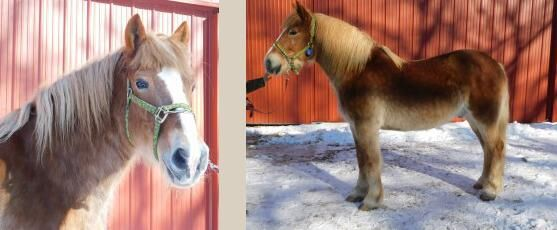 Horses rescued from CT farm up for public adoption