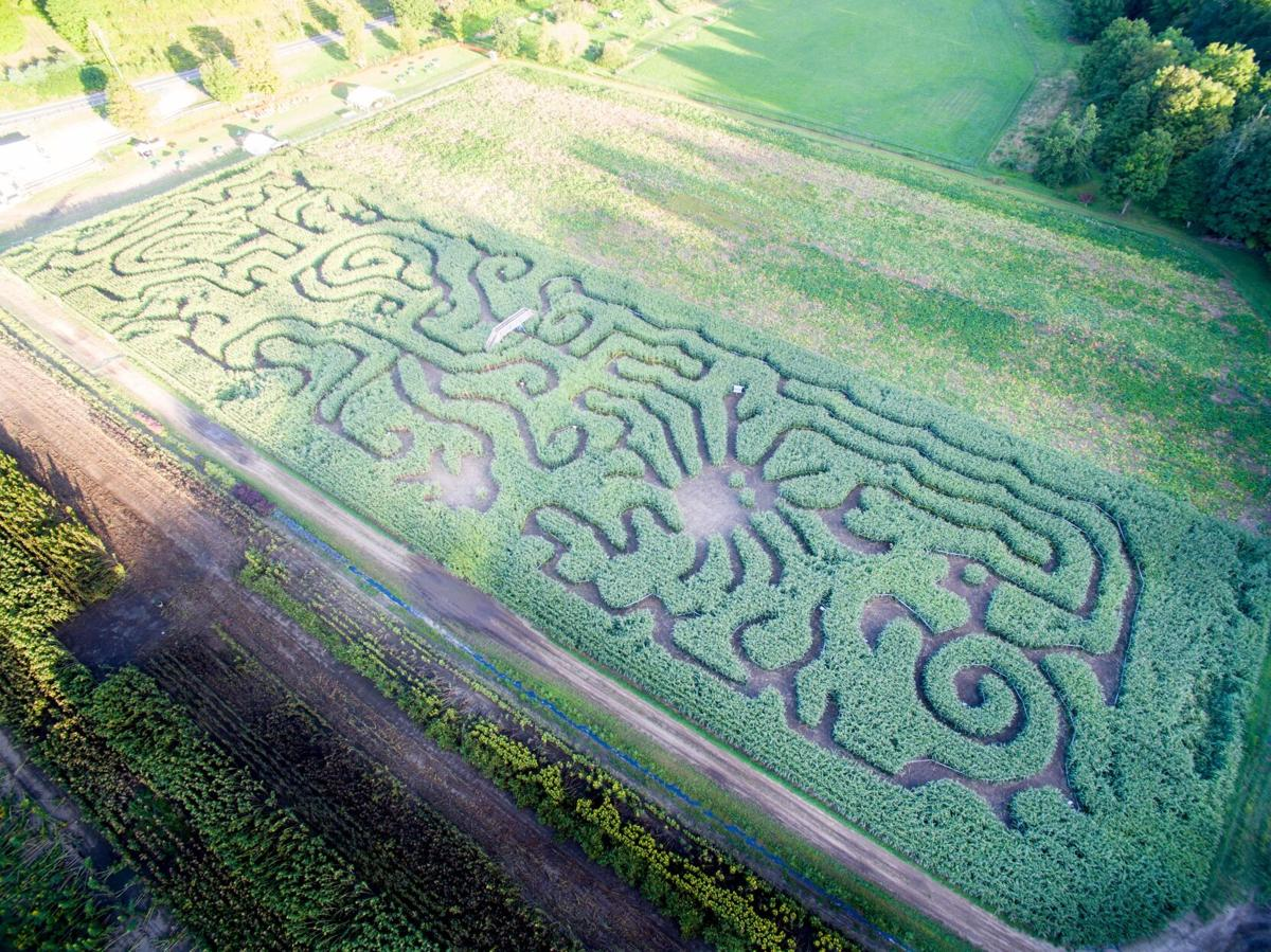 All ears: 7 corn mazes to pick from in Connecticut