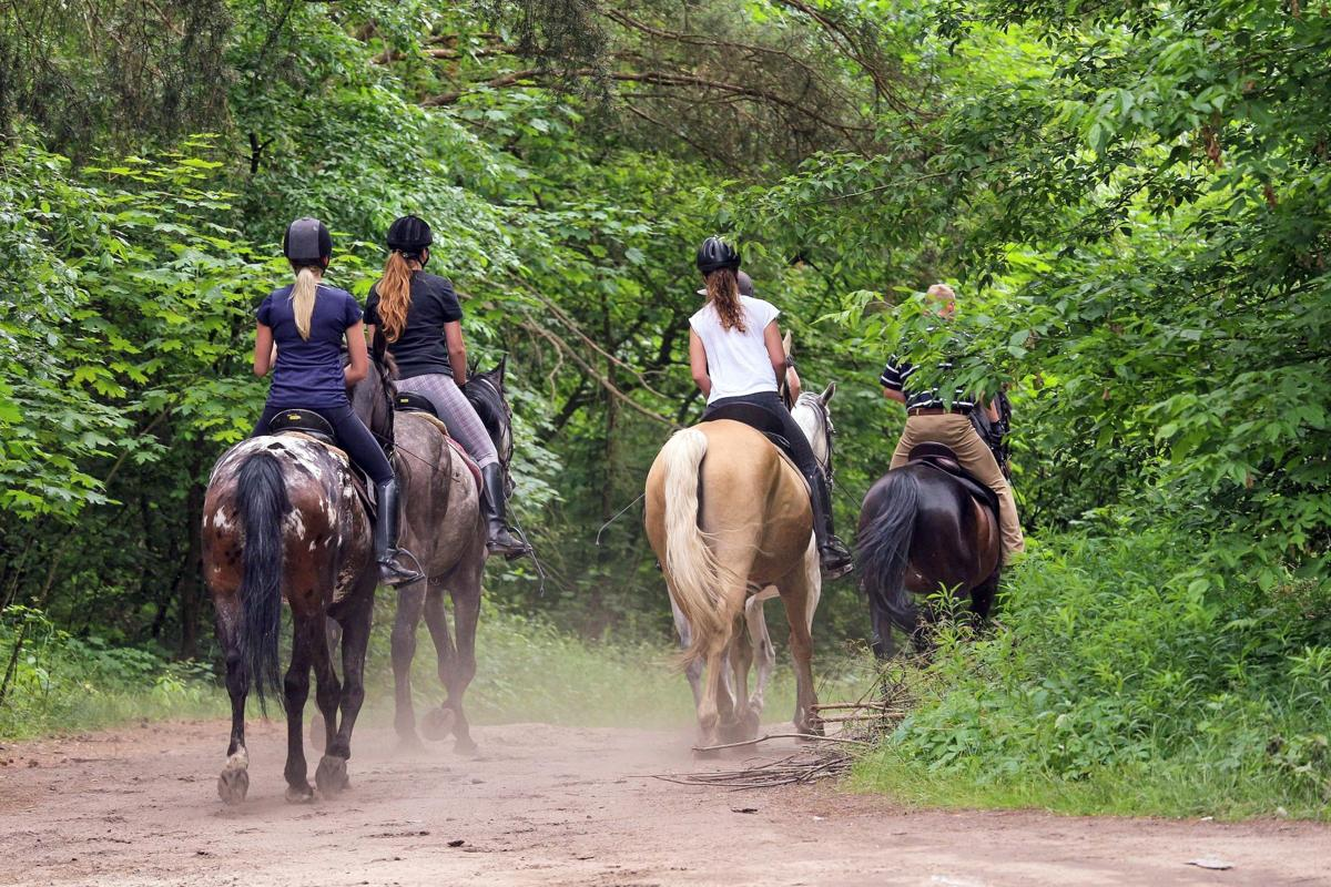 Giddy Up: Horseback Riding in Connecticut