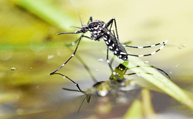 More West Nile Virus Detected in Antioch and Discovery Bay