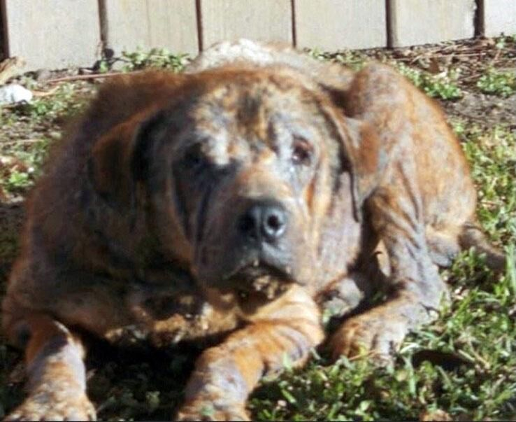 LAURA BURBAN: We in Conn. must keep helping 1M abandoned dogs in Texas
