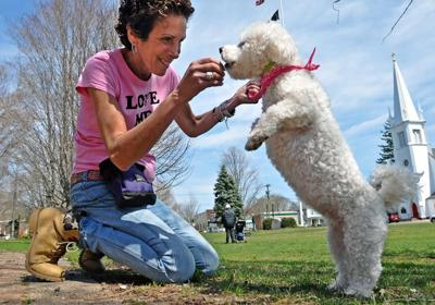 Meet the dog whisperer: Branford's Michelle McAdam shares her secrets in canine communication