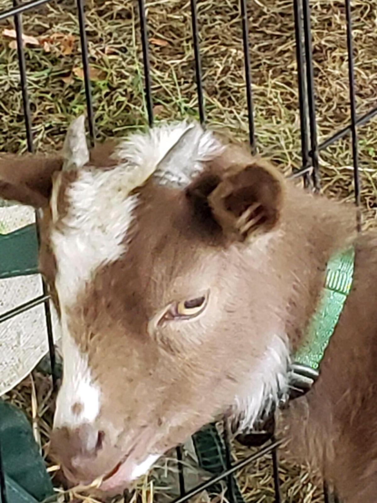 Branford Compassion Club's Animal Awareness day turns to month-long event