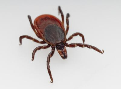 Lyme disease: Rooted in CT or bioweapon started in government lab?