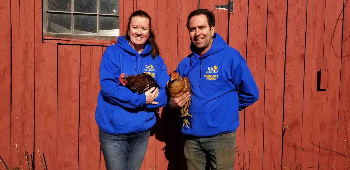'They can chicken out:' Farm offers chicken rentals as introduction to backyard farming