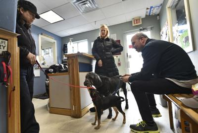 Dan Cosgrove Animal Shelter steps up for pets, owners in Branford, No. Branford