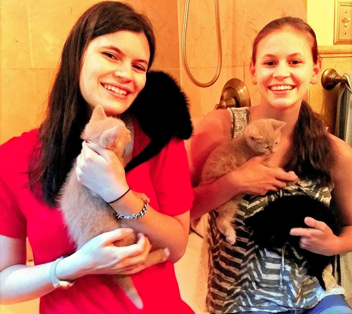Compassion Club welcomes kitten season; open for adoption