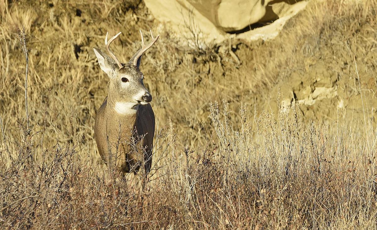 191113 deer questions-2