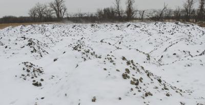 Sugar beets hauled off