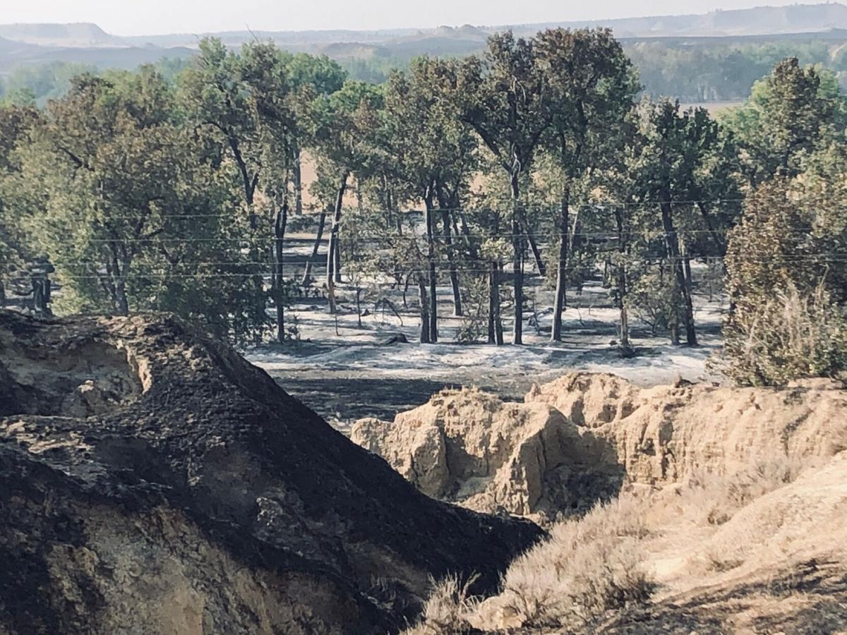 Rice and Snider Fire