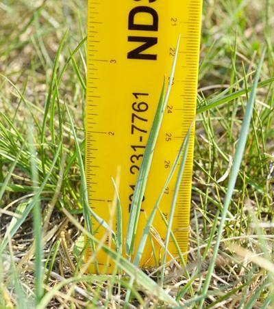 GRASS RULER