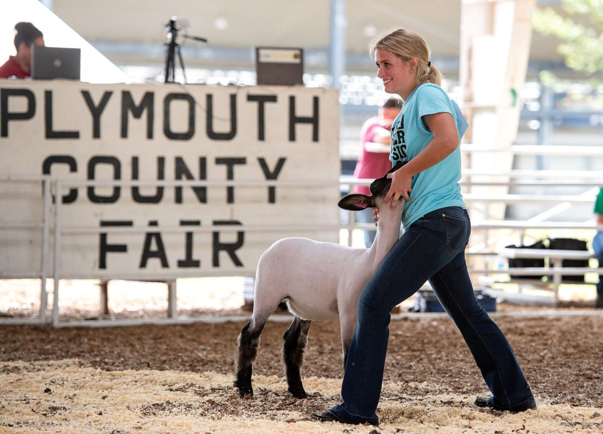 4-H'ers show off their lambs