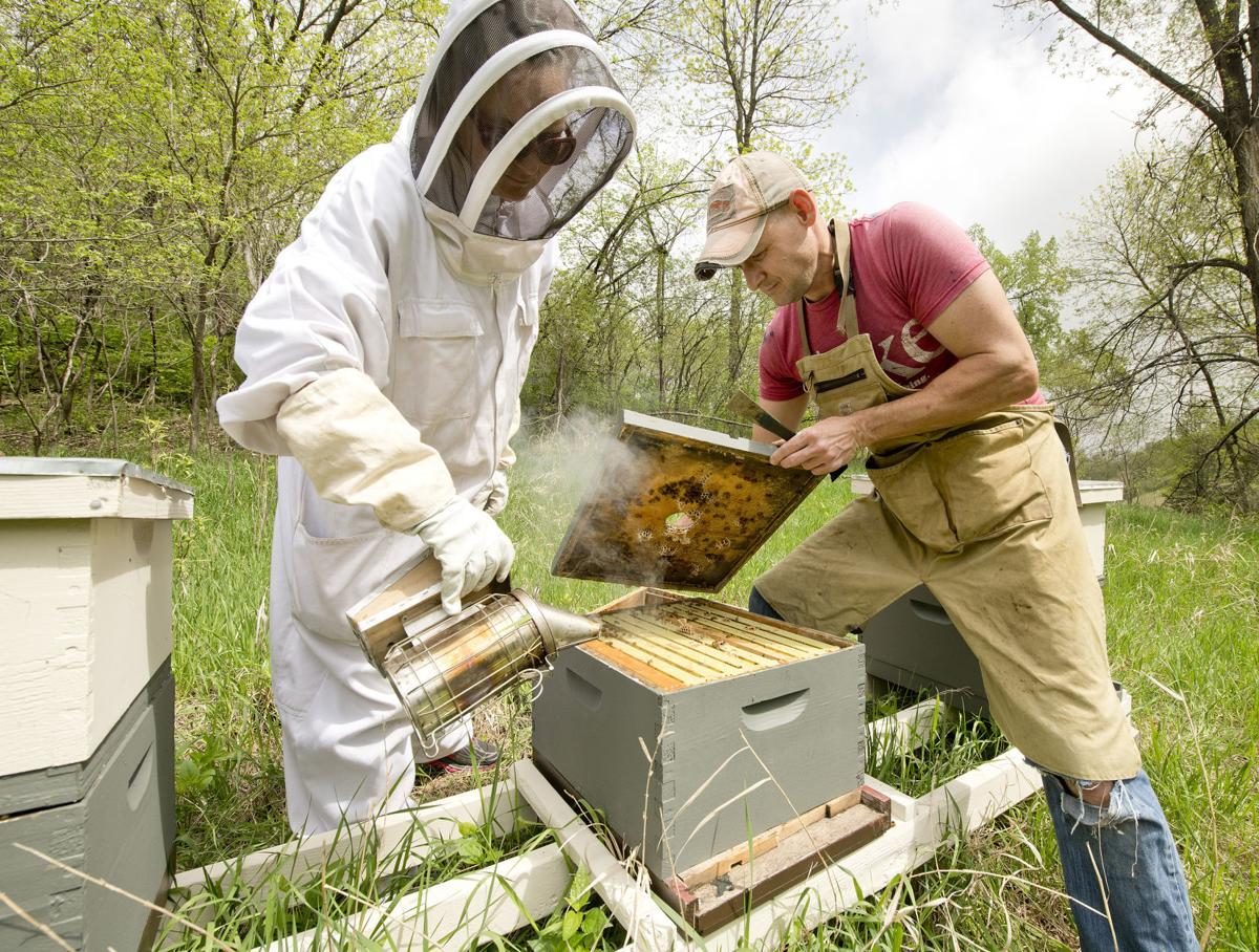 Wild Hill Honey new bees
