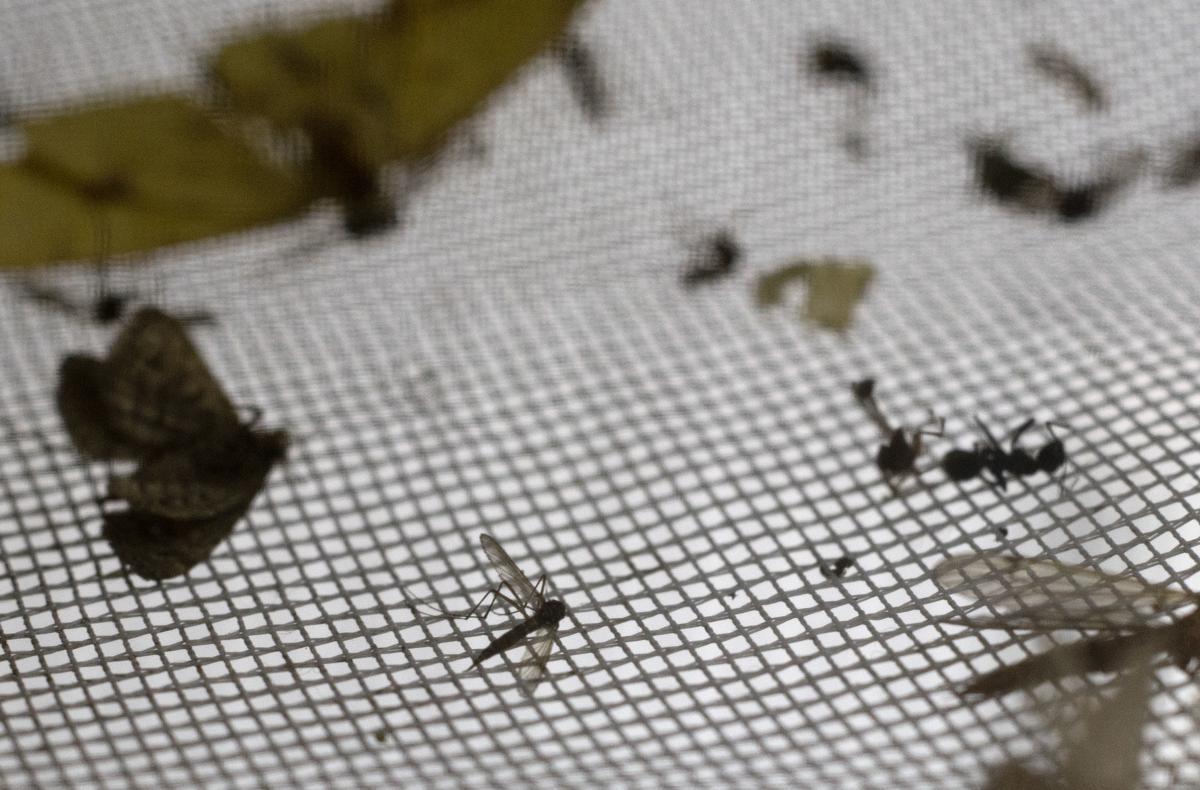 Public health mosquito traps