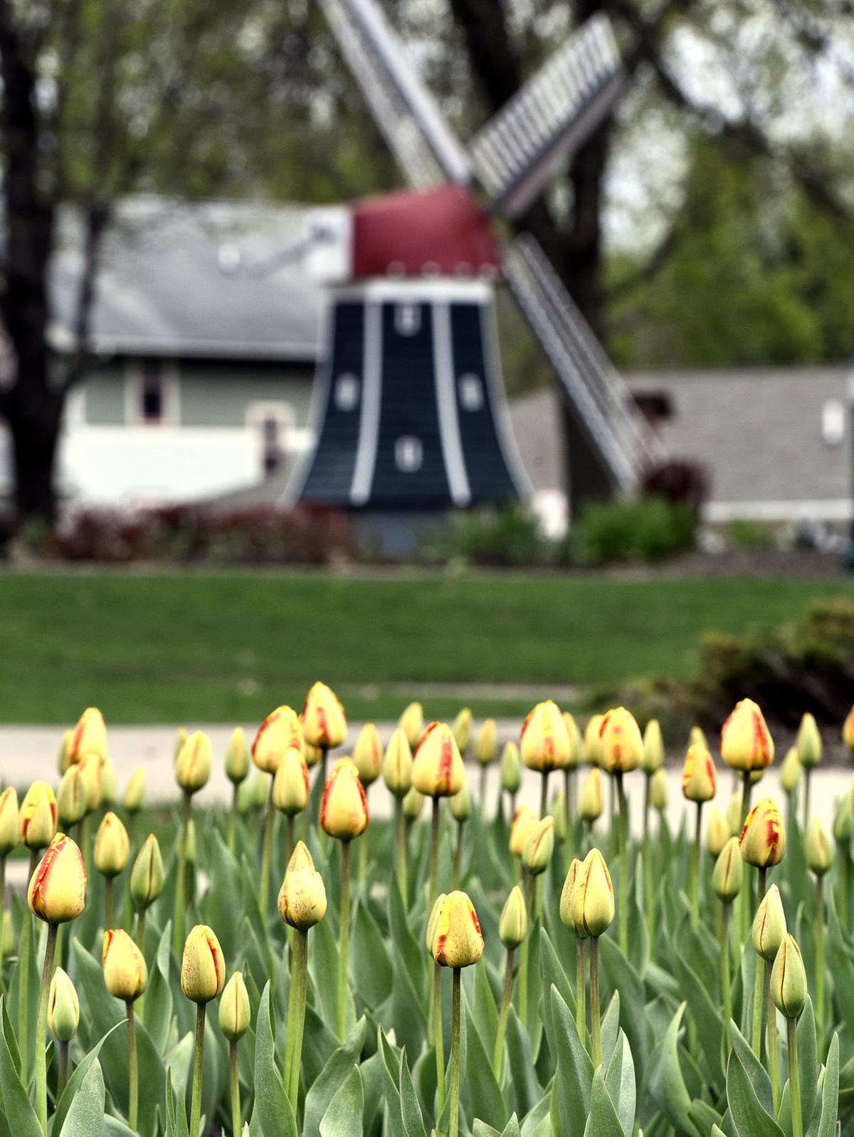 2019 Tulip Festival tulips