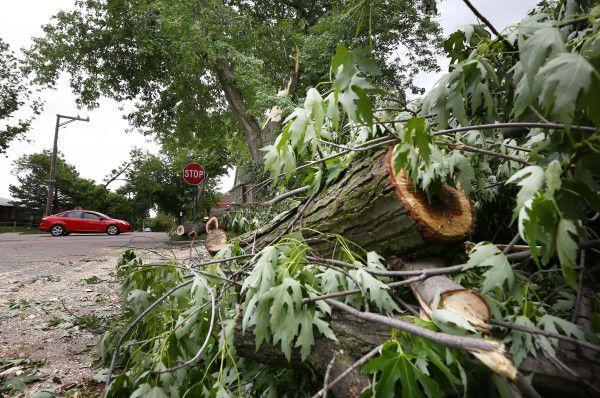 Fallen tree limb