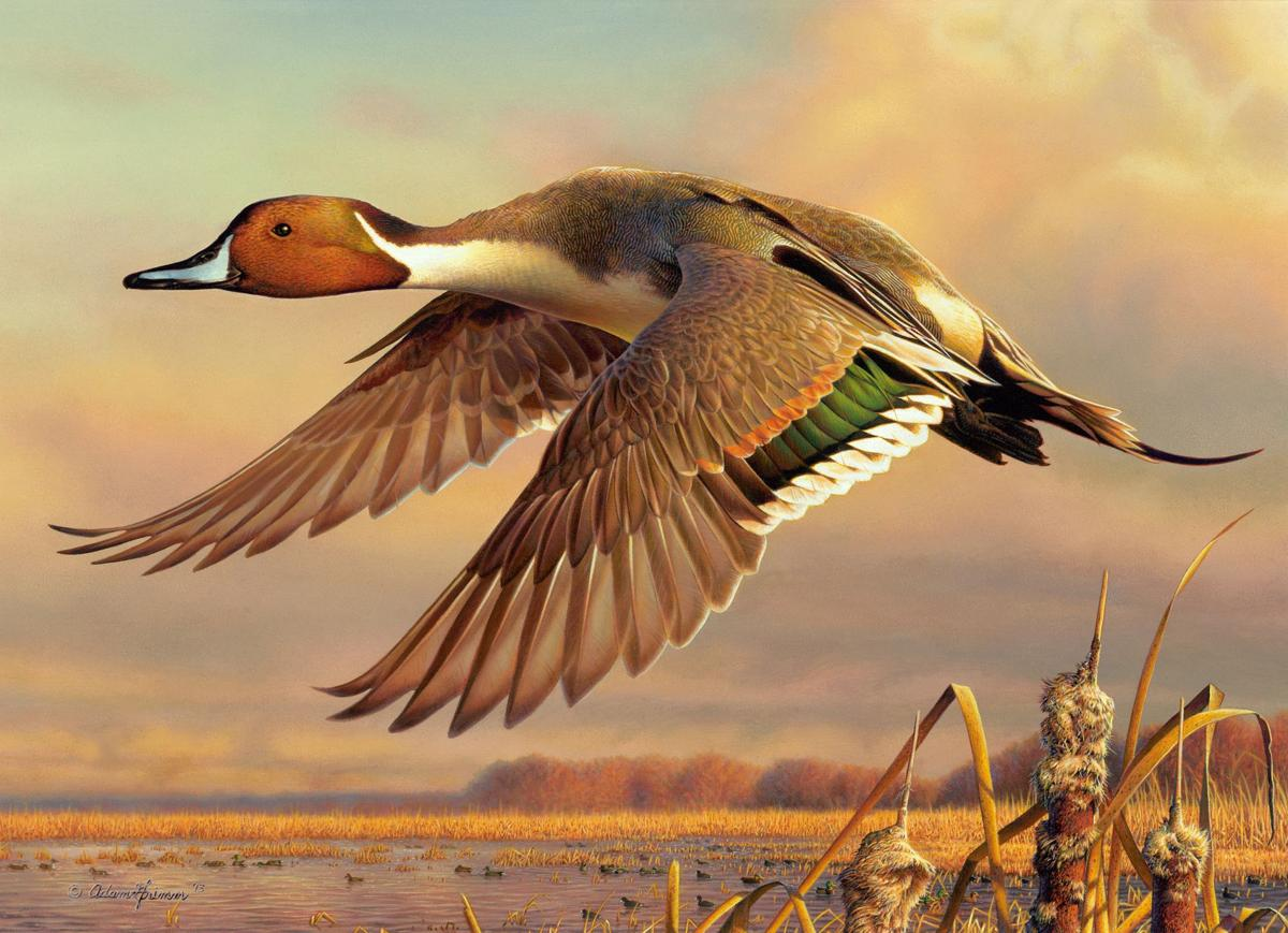 Siouxland artist shoots for top spot in Duck Stamp contest ...