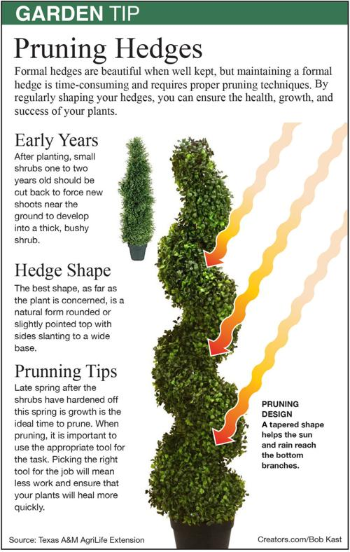 Topiary Designs Siouxland Homes Siouxcityjournal Com
