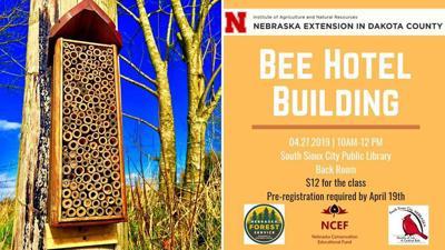 Bee hotel building