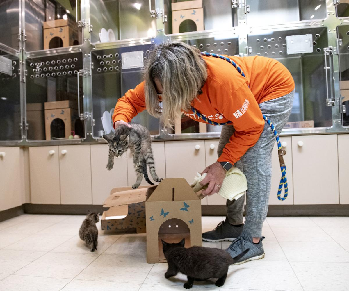 The Siouxland Humane Society is mostly empty during COVID-19