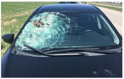 Bird-windshield crash