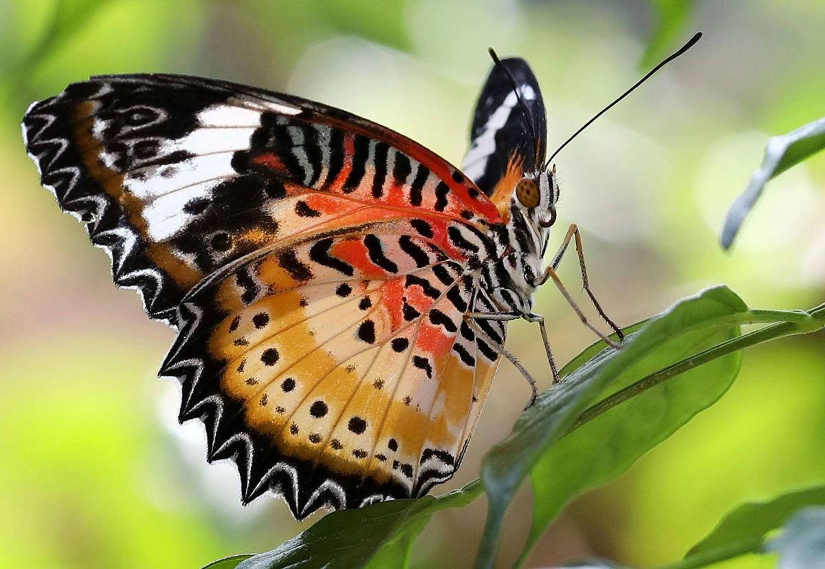 ButterflyHouse003_jl.jpg